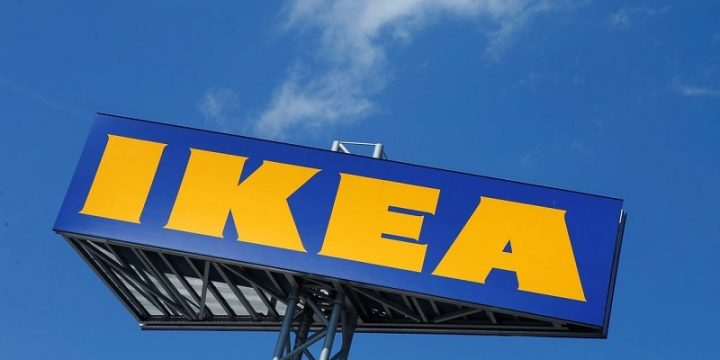 IKEA в Италии приютила бездомных собак