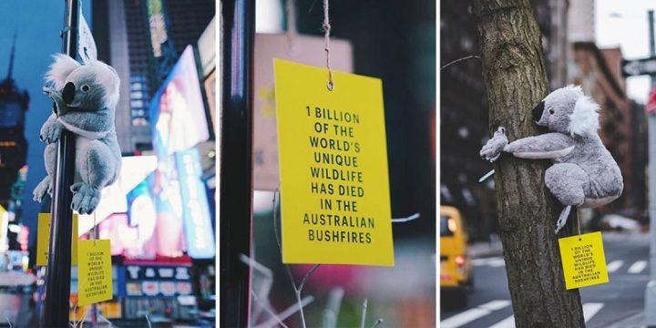 Плюшевые коалы собирают на улицах Нью-Йорка средства на благотворительность